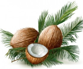 Coconuts with palm leaves vector