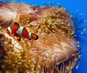 Deep blue sea swim in the fish Stock Photo