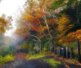 Fall fog on the mountain HD picture