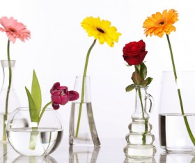 Flowers in glasses of pure water HD picture 01