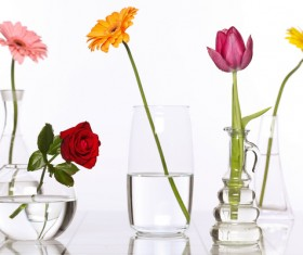 Flowers in glasses of pure water HD picture 02
