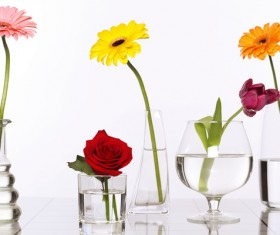 Flowers in glasses of pure water HD picture 03