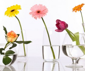 Flowers in glasses of pure water HD picture 04