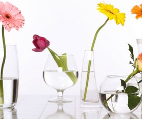 Flowers in glasses of pure water HD picture 05