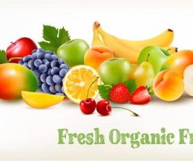 Fresh grganic fruits vector material