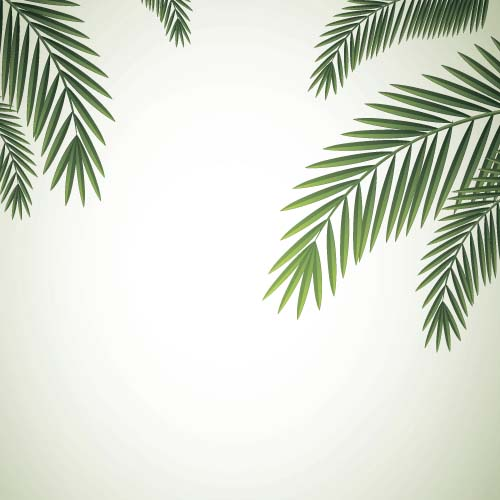 palm leaves wallpaper related - photo #32