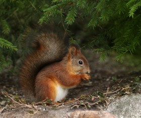 Hiding in the jungle corner eating food squirrels HD picture