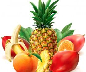 Juicy tropical fruit vector