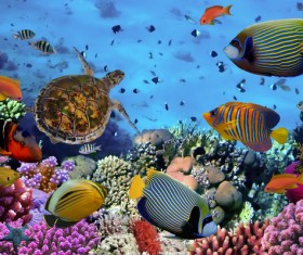 Pretty tropical fish with turtles Stock Photo