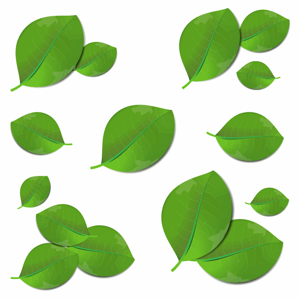 realistic green leaves vector illustration free download rh freedesignfile com leaves vector free leaves vector png