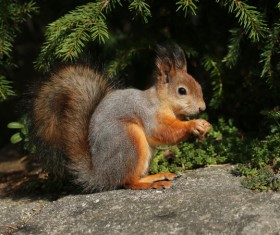 The little squirrel in the jungle HD picture
