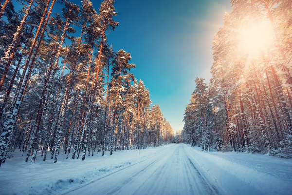 Beautiful Snowflake In The Sunlight: Winter Sun Beautiful Snow Scene Stock Photo Free Download