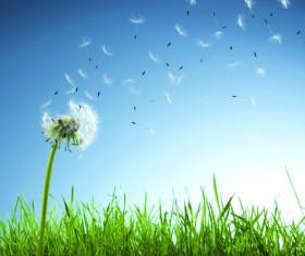 Aesthetic mood dandelion Stock Photo