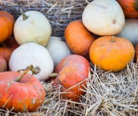 Autumn harvest pumpkin Stock Photo