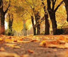 Autumn leaves golden fall Stock Photo