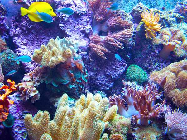 Beautiful Underwater World Coral Reef Stock Photo - Nature ...