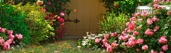 Beautiful garden banners HD pictures Flowers stock photo free