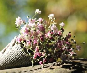 Beautiful gypsophila Stock Photo