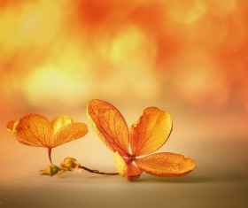 Beautiful petals Stock Photo