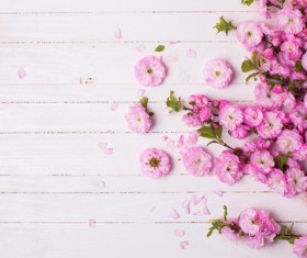 Beautiful pink flower background HD picture