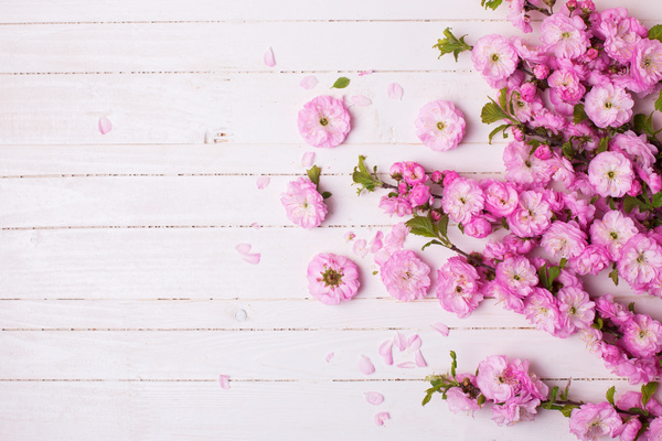 Pink Background Hd