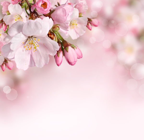Beautiful Pink Flowers Hd Picture