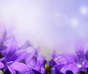 Beautiful purple flower HD picture