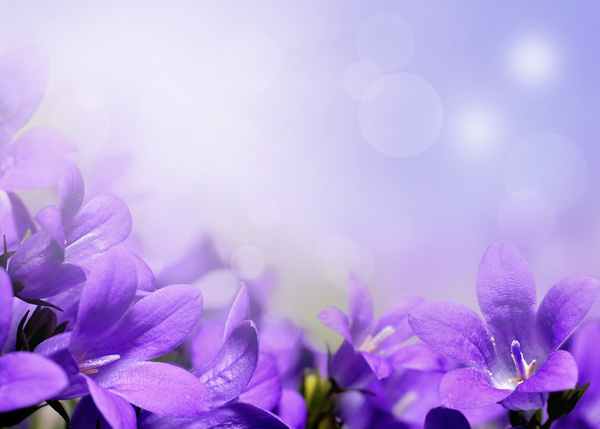 beautiful purple flower hd picture  flowers stock photo free download, Beautiful flower