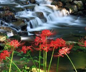 Beautiful red Bana Stock Photo 05