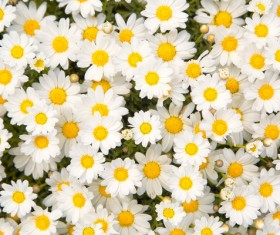 Beautiful white flowers HD picture