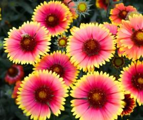 Beautiful wild chrysanthemum Stock Photo
