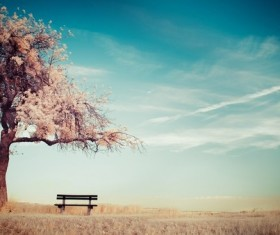 Cherry tree seats HD picture