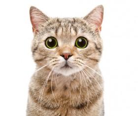 Cute puppet cat Stock Photo