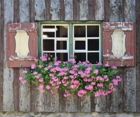 Flowers Window Stock Photo