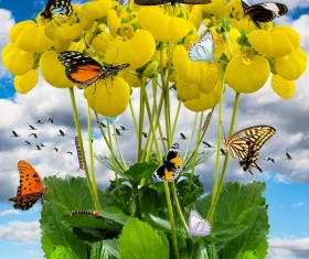 Flowers on a butterfly HD picture