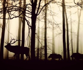 Forest fog wild boar Stock Photo