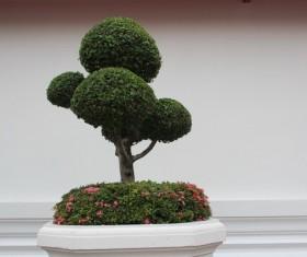 Gardening Flower Bonsai Stock Photo