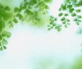 Green Ginkgo biloba background Stock Photo