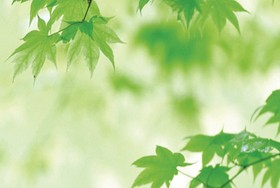Green leaf banner HD pictures