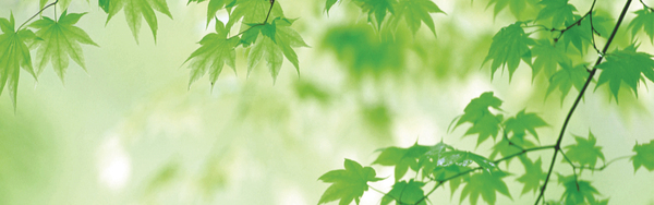 green leaf banner hd pictures free download