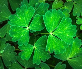 Green leafy herbs Stock Photo