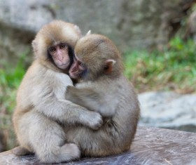 Hugging the two little monkeys together Stock Photo
