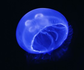 Jellyfish on the sea HD picture
