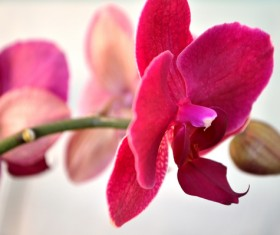 Red petals of orchids Stock Photo