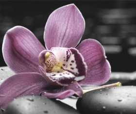 River with purple orchid Stock Photo