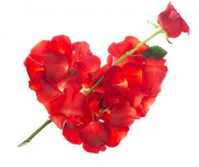 Romantic heart shaped roses HD picture