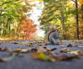Squirrel cute wildlife HD picture