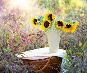 Sunflower, Vase, Bouquet HD picture