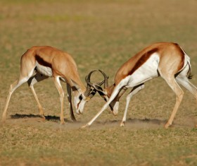 The battle between animals HD picture 03