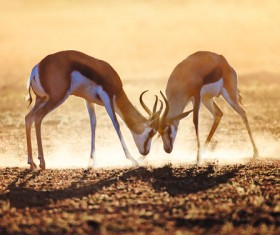 The battle between animals HD picture 08